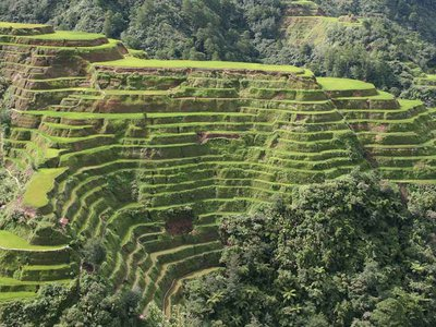 Banaue rice terraces (N. Luzon, Philippines) taken from observation point at beginning of road to Bontoc