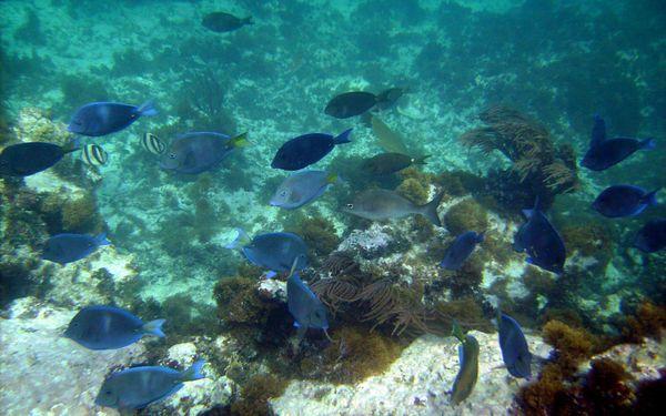 School of reef fish. thumbnail