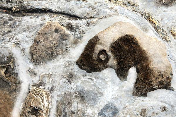 Wild giant panda thumbnail