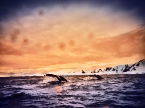 Whale Spotting thumbnail