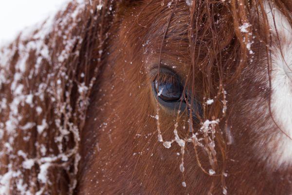 Nevada Mustang thumbnail