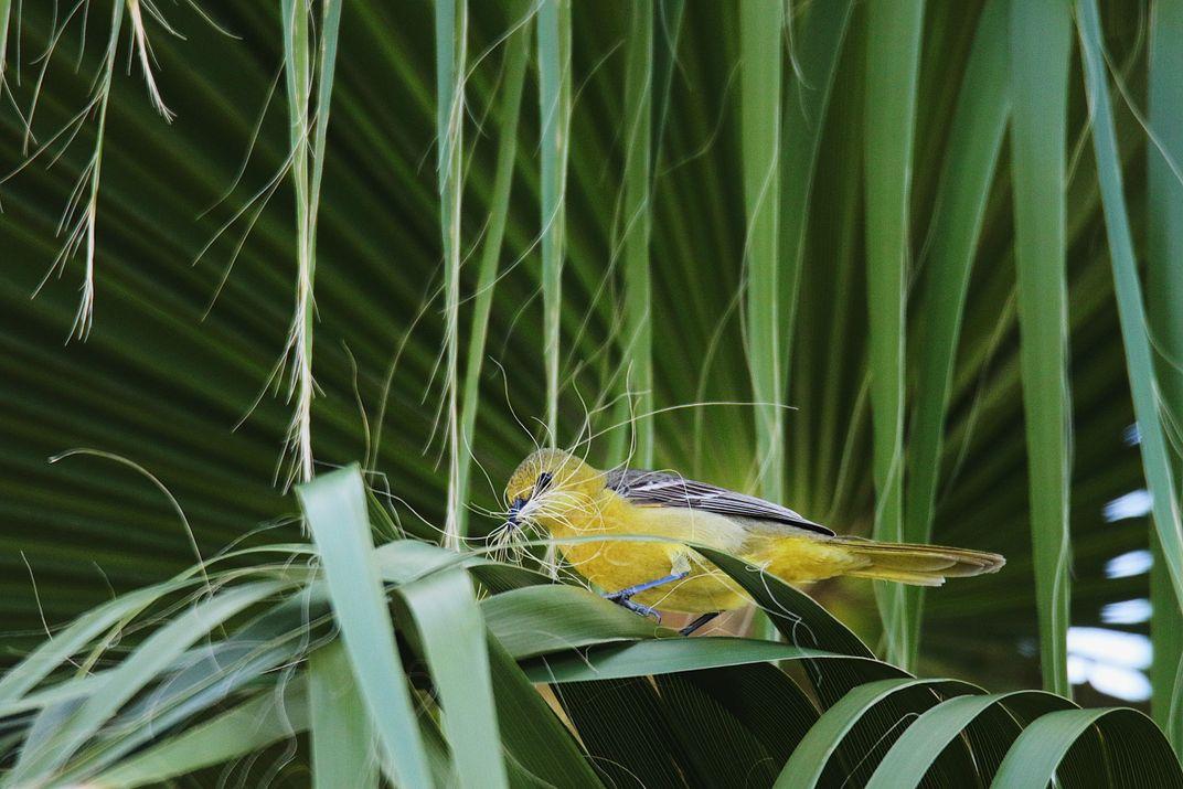 Audubon Photography Award Winners Show the Breathtaking Beauty of Wild Birds