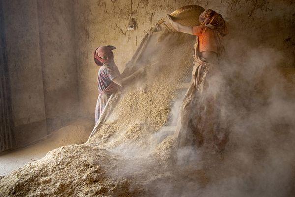 Wheat Processing thumbnail