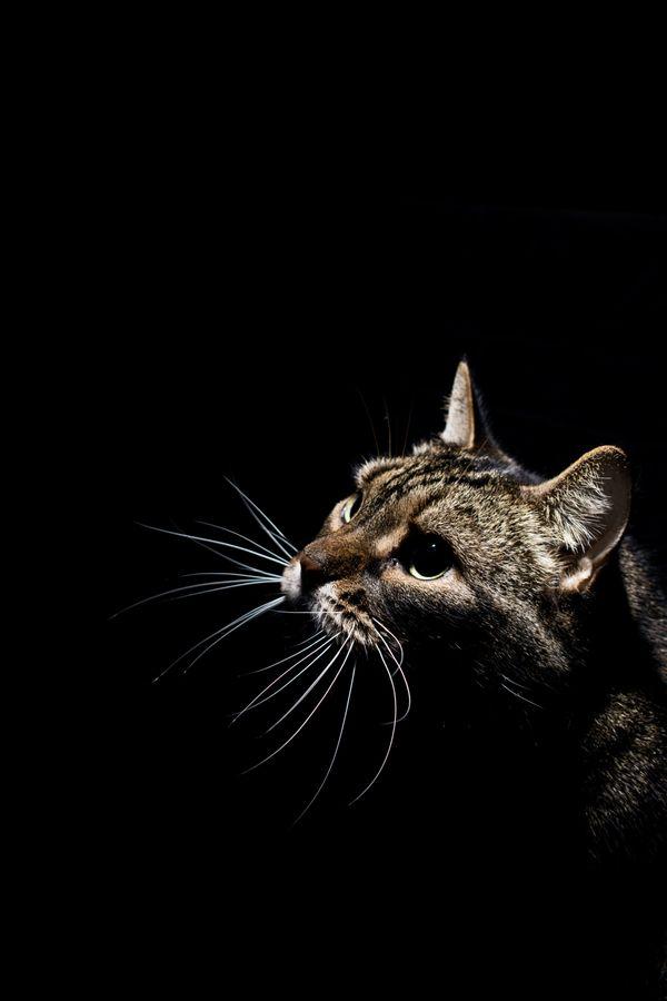 Cat Looking Towards the Light thumbnail