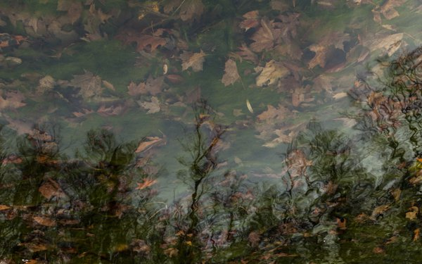 """Submerged Dream"" thumbnail"
