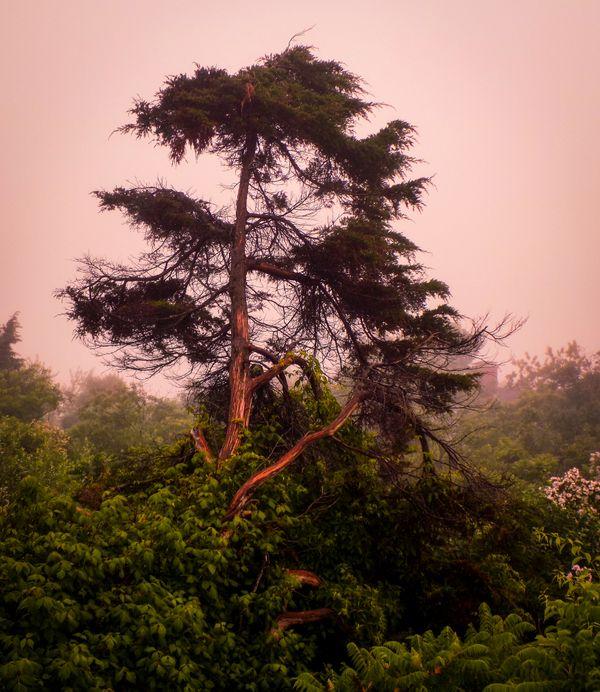 Beach Tree In Morning Fog thumbnail