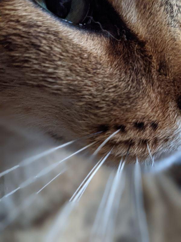 Cat's Eye thumbnail