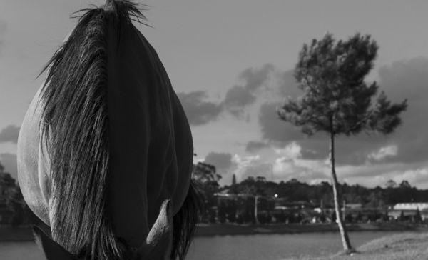 Dalat Horse thumbnail