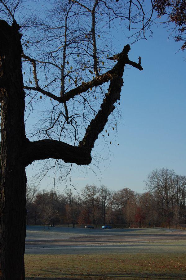 Right Turn Tree-Genesee Valley Park at day break, Rochester, NY thumbnail