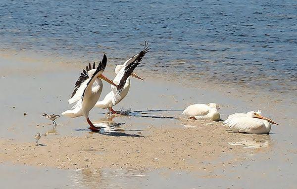 Sanibel birds meeting thumbnail