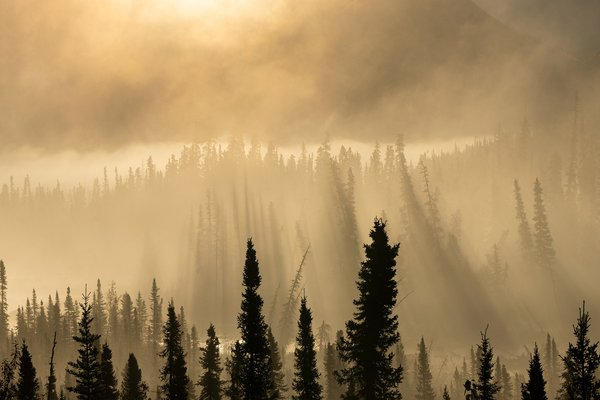 Alaska, light and misty mood at sunrise thumbnail