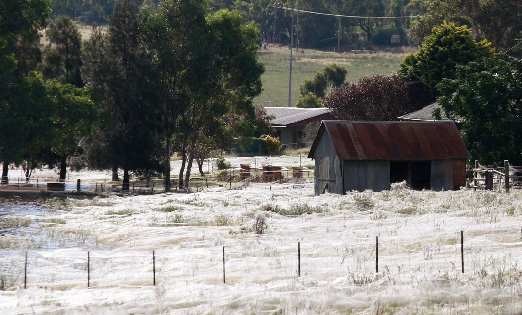 No, It's Not Really Raining Spiders in Australia