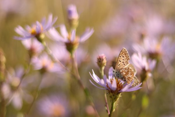a late summer meadow thumbnail