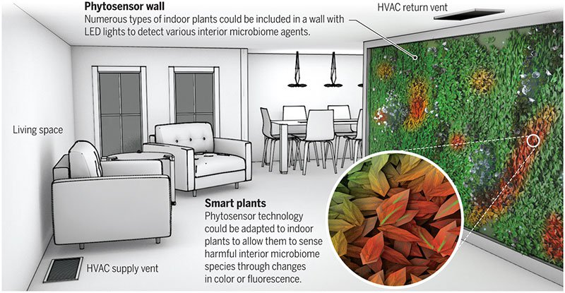 Could Houseplants Keep Tabs on the Health of Your Home?
