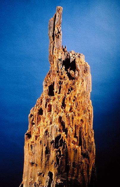 The Spotsylvania Stump