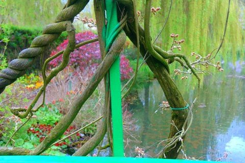 A Vine's Eye View of Giverny thumbnail