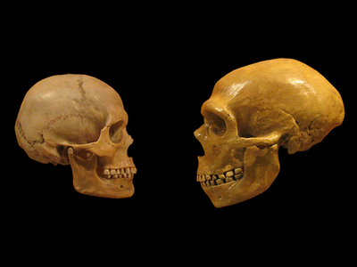 The genetic legacies of modern humans and Neanderthals are more intertwined than once thought.