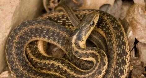 snake1-470.jpg