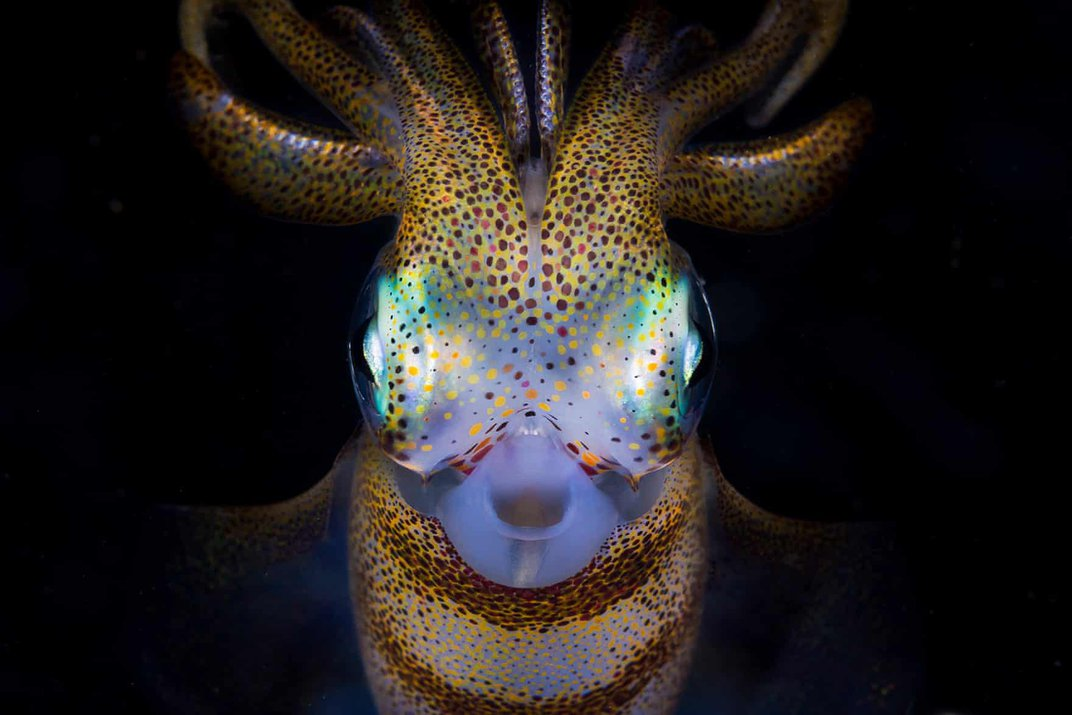 See Stunning Undersea Images That Showcase Our Blue Planet