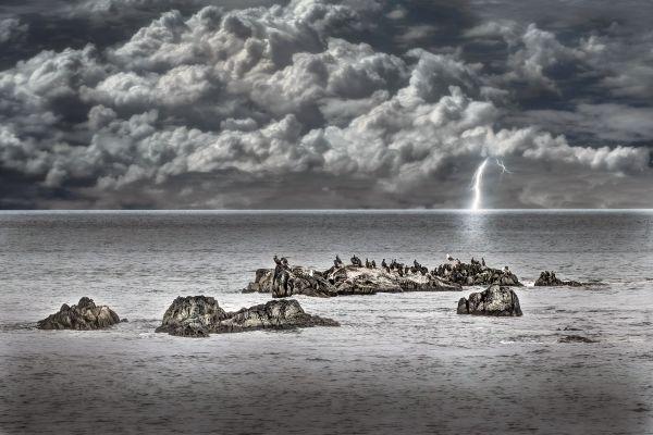 seabirds sitting on the rocks thumbnail