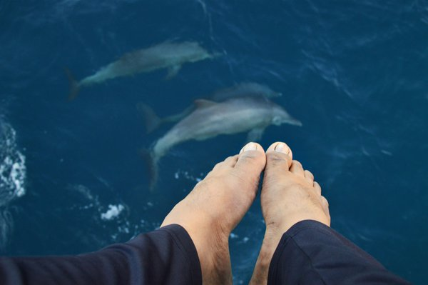 Swim with Dolphins at Sea thumbnail