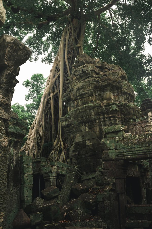 Ta Prohm: Temple taken back by nature thumbnail