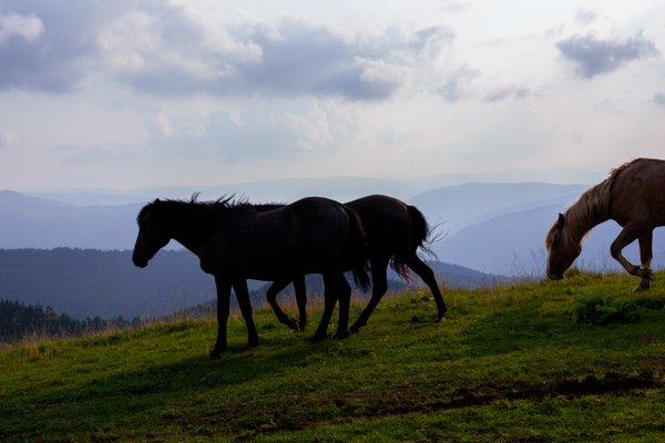 Free horses in the mountains thumbnail