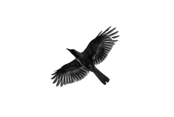 Free Bird thumbnail