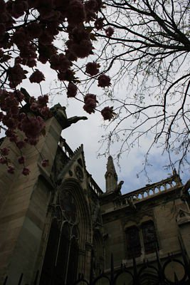 A different angle of Notre Dame. thumbnail