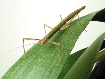 Foot fluid may help bugs escape in a hurry.
