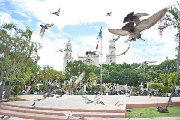 Pigeons flying around Plaza Grande Park in Merida, Mexico. thumbnail
