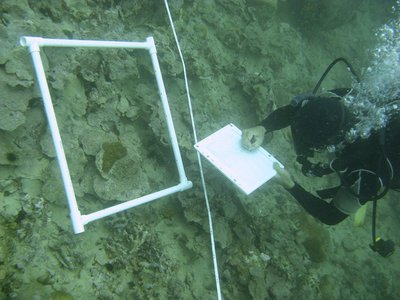 Andrew Altieri of the Smithsonian Tropical Research Institute in Panama conducts a survey where more than 90 percent of the coral reef has died due to hypoxia.