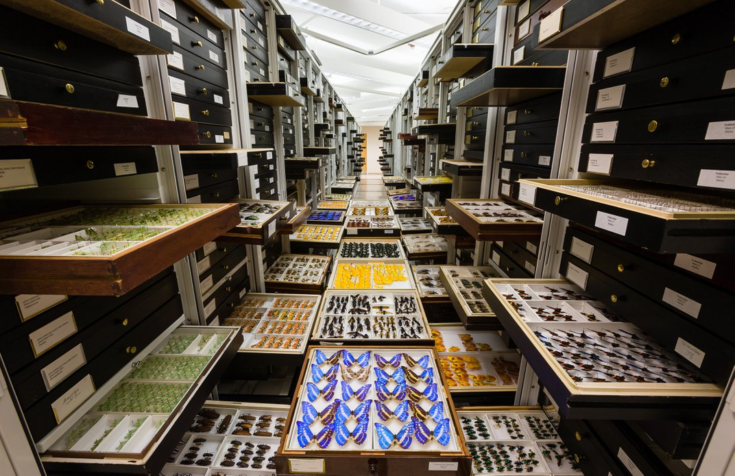 Aisle of cabinets with drawers pulled out to display colorful insects inside