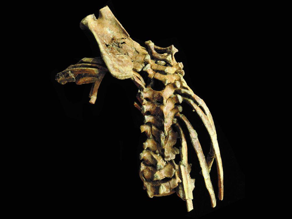Selam Spine