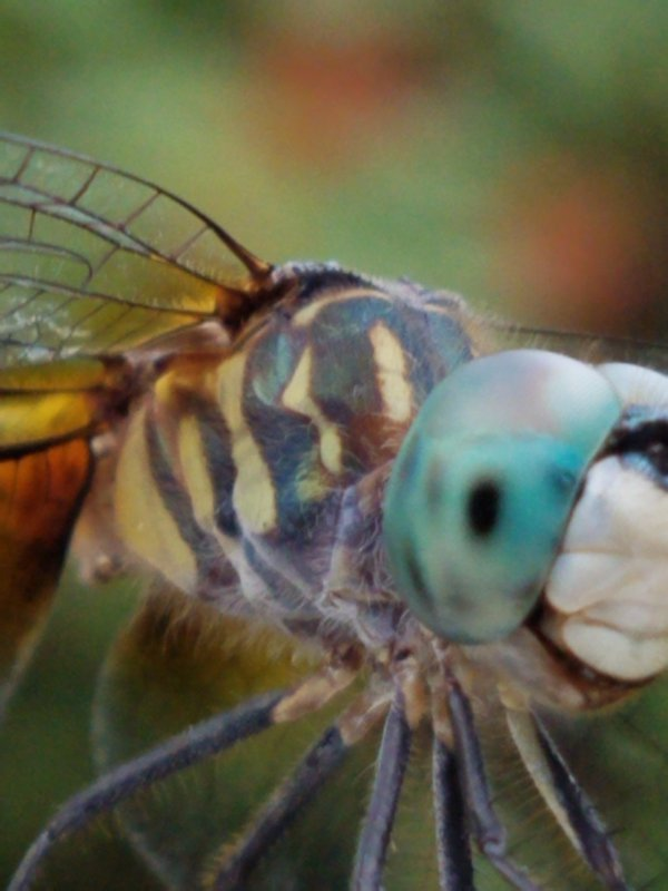 closeup of dragonfly thumbnail