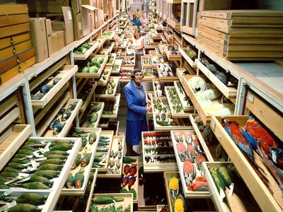 Roxie Laybourne's work changed the role of museums in public life by turning the Smithsonian's collection of thousands of birds into an applied science tool.