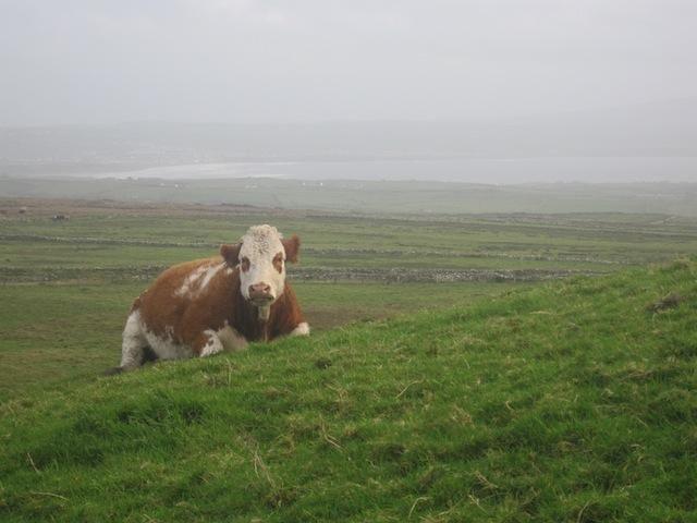 Is Corned Beef Really Irish?