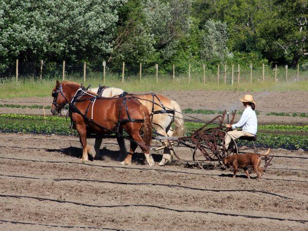 Organic Farming thumbnail