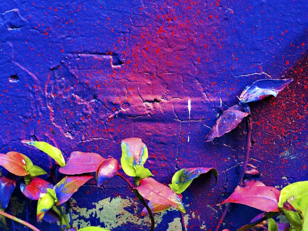 painted wall & weeds thumbnail