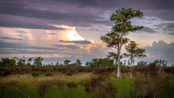Florida's Everglades thumbnail