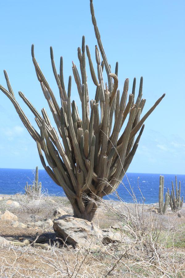 Arid and Rugid Yet Beautiful Aruba thumbnail