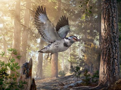An artist's impression of the prehistoric bird from the early Cretaceous period that retained some pretty dino-like features.