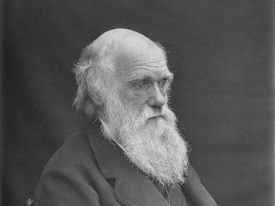 The researchers posit that Darwin contracted Lyme disease while exploring the expanses of Great Britain
