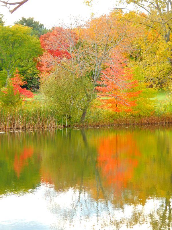 Colorful trees behind Blacks Nook, around Fresh Pond, in Cambridge thumbnail