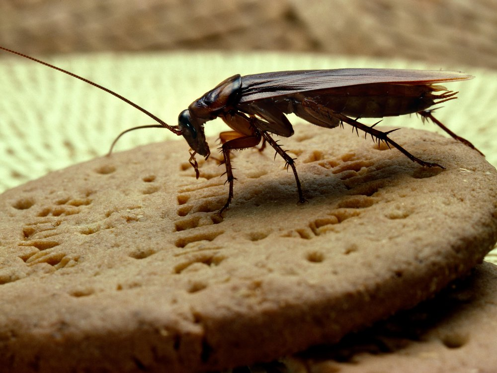 Roach and Cookie