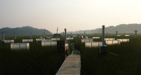 Chesapeake Bay research from 2006