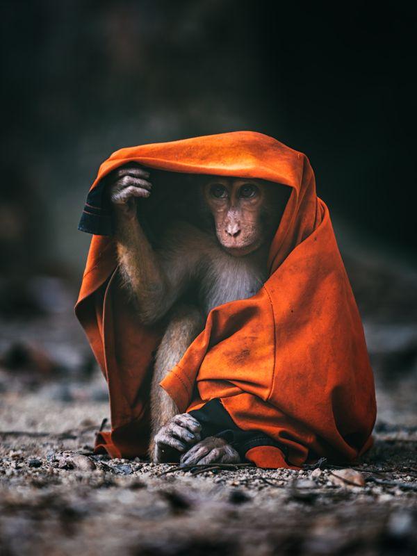 a shy monkey thumbnail