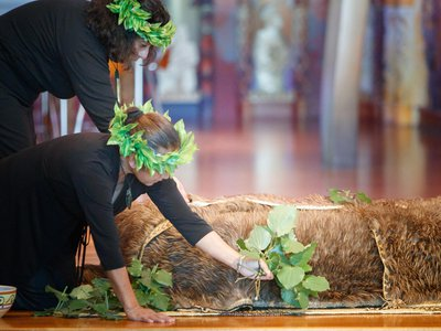 Covering the tūpuna (Māori ancestral remains) with the leaves of the kawakawa
