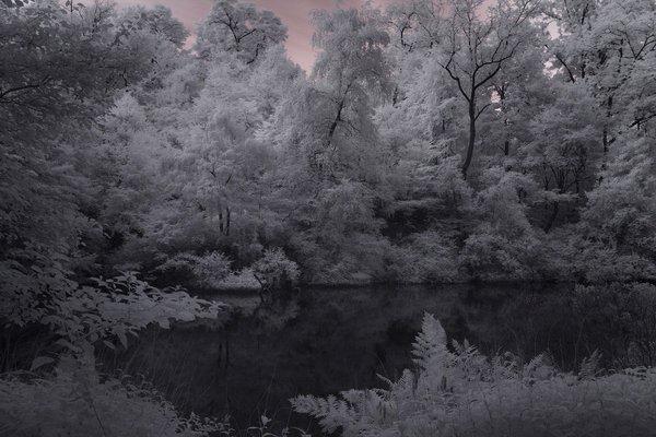 Infrared Photograph Central Park NYC thumbnail