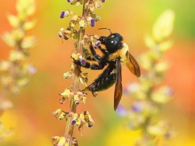 Bee pollination drives billions of dollars a year in global agricultural production, but the busy insects are under threat.